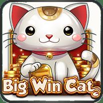 Big-Win-Cat
