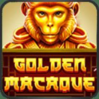 Golden-Macaque