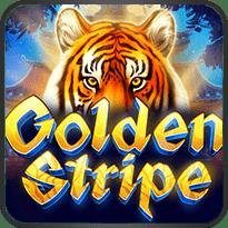 Golden-Stripe